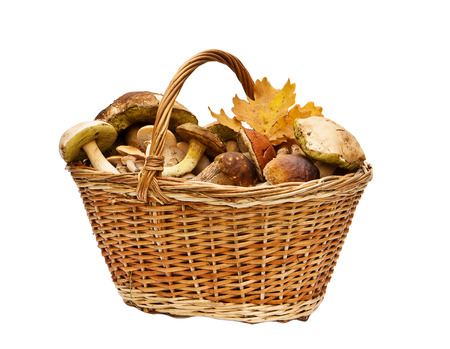 fungous: Basket with mushrooms on white background