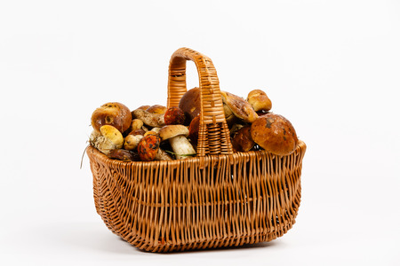 fungaceous: Basket full of mushrooms on a white background