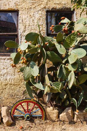 Cactuses near the farm house photo