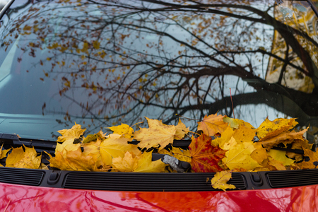 Fallen leaves of a maple on a car cowl in autumn season Stock Photo