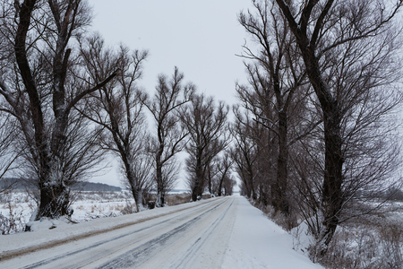 Winter view of the old elms growing along the road Banque d'images