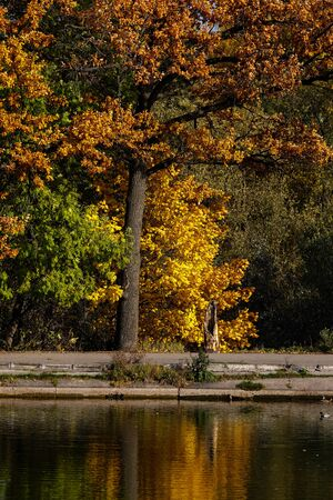 Deciduous forest painted in autumn reflecting on the water surface of the pond