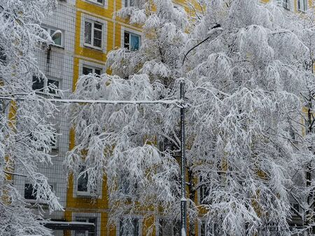 Winter landscape with the trees covered with snow after a heavy snowfall near city buildings