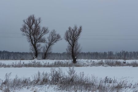 Winter view of the old elms growing along the road Stockfoto