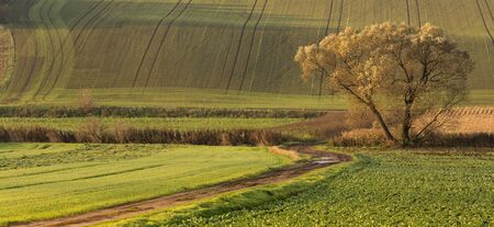 Bends and curves of fields on hills of Moravia, Czech Republic