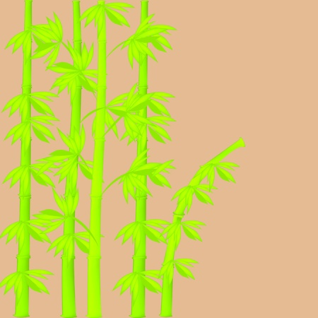 Bamboo illustration with tan background
