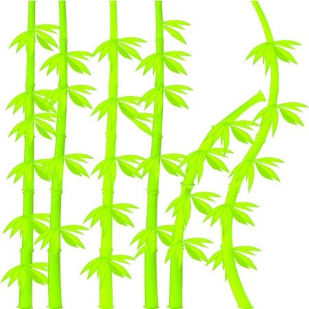 bush mesh: Bamboo illustration