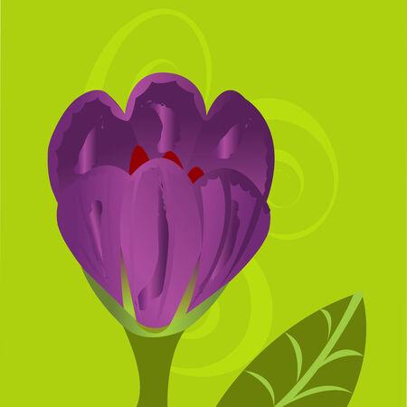 flower art: Crocus fiore arte decorazione su sfondo sfumato