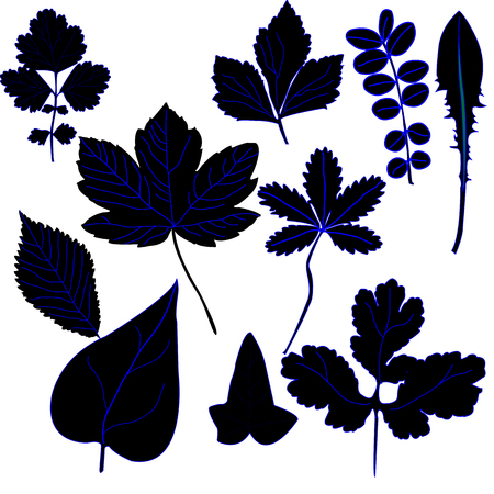 Silhouette of ten different types of leafs;