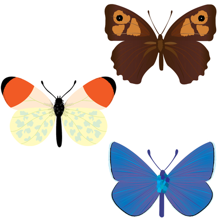 Collection of three common butterflies; Maniola Jurtina; Anthocharis Cardamines; Polyommatus icarus