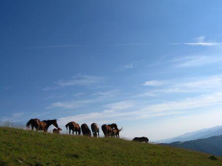A herd of wild horses Stock Photo