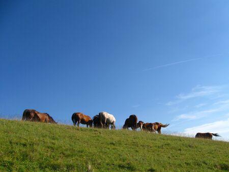 Beautiful wild horses Stock Photo