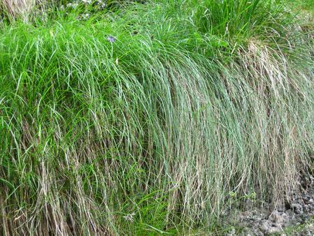 Close up to wild grass