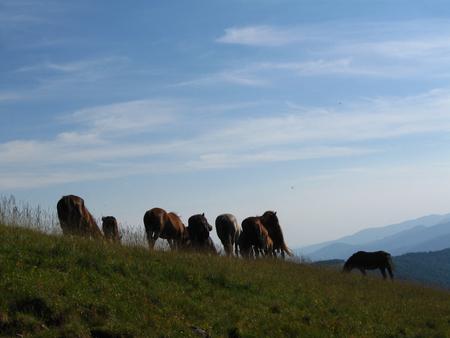 Herd of wild horses top the mountain