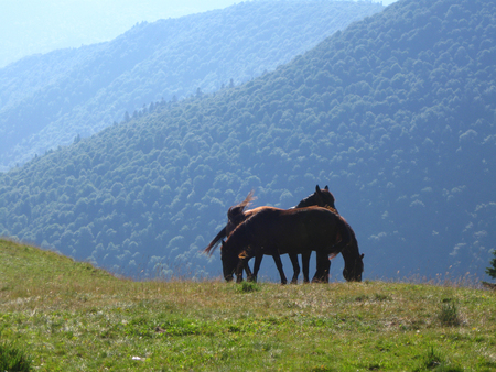Two beautiful wild horses Stock Photo