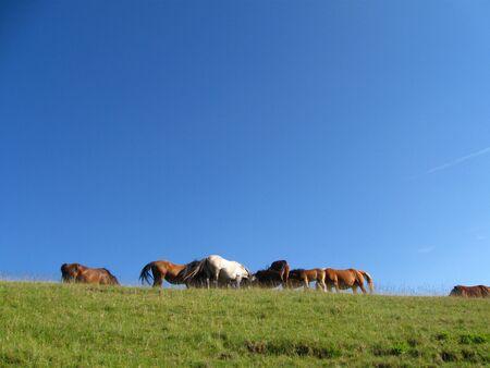Wild horses herd