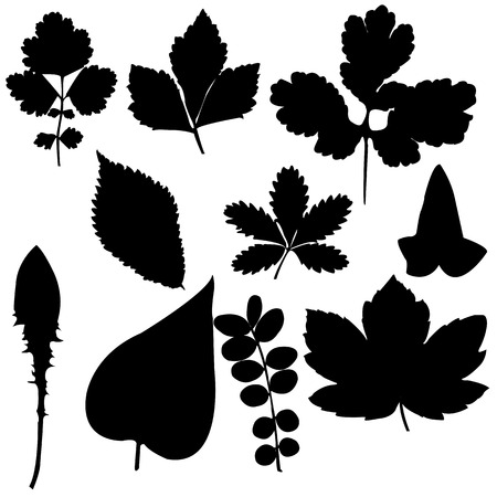Ten silhouettes of leaf