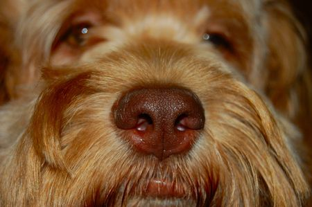 nose close up: extreme dog nose Stock Photo