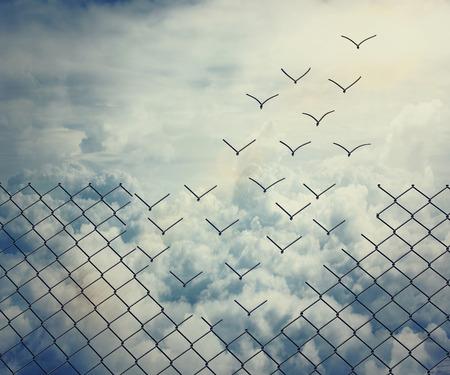 concept: Maglia di filo metallico si trasformano in uccelli che volano sopra il cielo