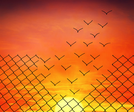 Metallic wire mesh transform into flying birds on sunset sky