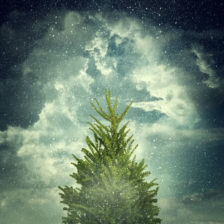 snowlandscape: View of a winter day with cloudy sky, snowflakes, green fir and fog. Christmas background with snowy, tall fir Stock Photo