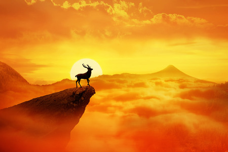 Silhouette of a lonely deer with long horns standing on a cliff against orange sunset. Dusk sky over the clouds in the mountains. Wild life landscape scene screen saver Фото со стока