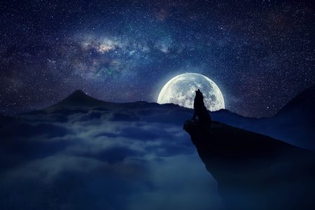 stars  background: Silhouette of a lonely wolf  standing on a cliff  howling to the full moon. Starry sky over the clouds in the mountains. Wild life landscape scene screen saver.
