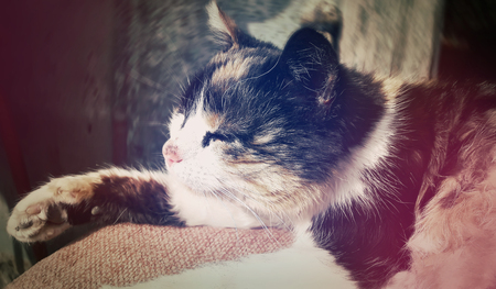 living idyll: Spotted country cat sleeping. Cute kitten resting