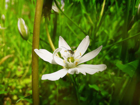 wild flower: White, wild flower with a small beetle in the middle of a green meadow. Spring illustration