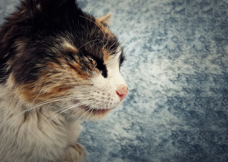 sneak: Stripped cat in profile looking forward attentive, sneak. Copy space Stock Photo