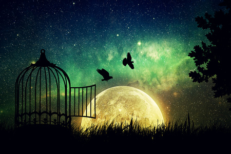beautifu: Birds couple escaping from the cage. Freedom concept. Released to nature. Beautifu and positivel screen saver with a starry sky and a full moon