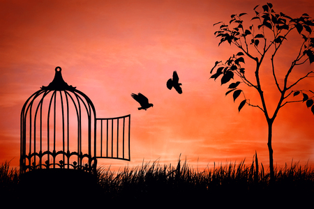 captivity: Birds couple escaping from the cage. Freedom concept. Released to nature