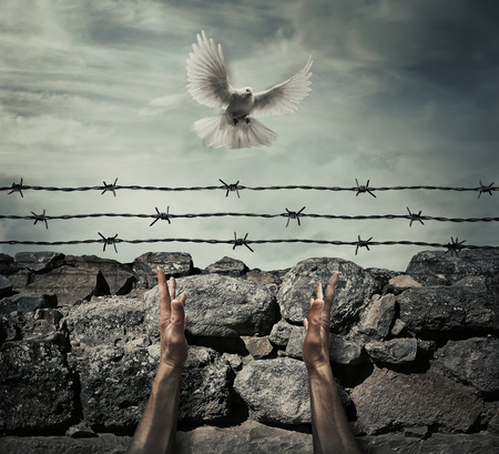 Man arms on a stone wall fence background with barbed wire on top as a convict in a prison rise hands to the sky on a flying pigeon. Need forgiveness, liberation and pacification concept.