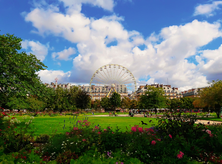 Landscape of Tuileries garden with Ferris wheel in a sunny summer day, Paris, France.