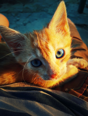 Close up view of a cute orange cat lying on its owners knees. Beautiful kitten sight. Zdjęcie Seryjne