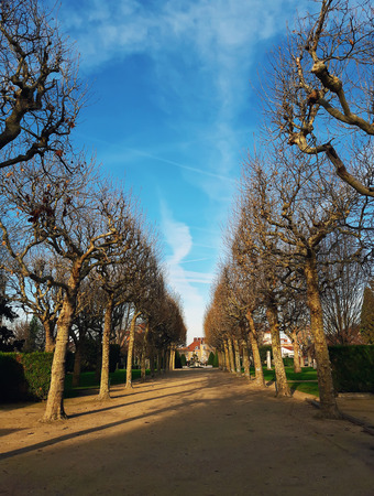 Bare trees alley in the park Square du marechal Joffre in Asnières-sur-Seine, Paris suburb in France. Cold and sunny winter morning with a blue sky.