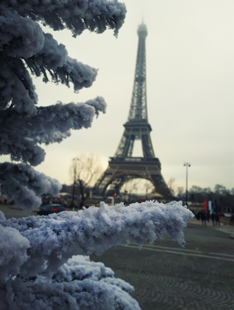 Snow covered fir branches, christmas tree close up in front of Eiffel Tower in Paris, France.