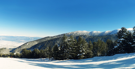 Mountain fir forest and winter snow peaks, sunny day in Bansko, Bulgaria. Reklamní fotografie