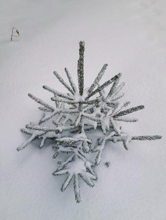 Snow covered little fir tree Stok Fotoğraf