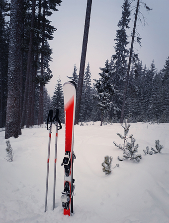 Pair of skis in snow surrounded by fir tree forest. Red skis equipment in winter mountains background. Holiday vacation and skiing sport concept.