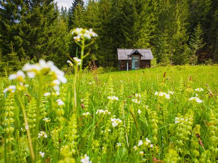 Wooden cabin on the blooming meadow surrounded by coniferous woods. Picturesque spring background of the Carpathian mountains. Stockfoto - 126669203