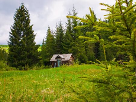 Picturesque spring scene with wooden cabin cottage on a lush pasture surrounded by pine woods. Old house in the middle of coniferous forest.