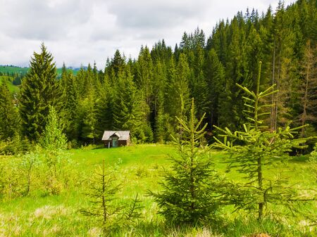 Llittle fir trees on the green grass field in front of a wooden cottage surrounded by coniferous forests. Picturesque spring idyllic scene of the Carpathians. 스톡 콘텐츠
