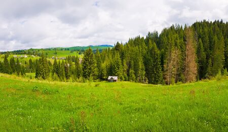 Picturesque spring Carpathians silent scene with a green and lush pasture and old cabins on the valley surrounded by pine woods in Yablunytsya, Ukraine.