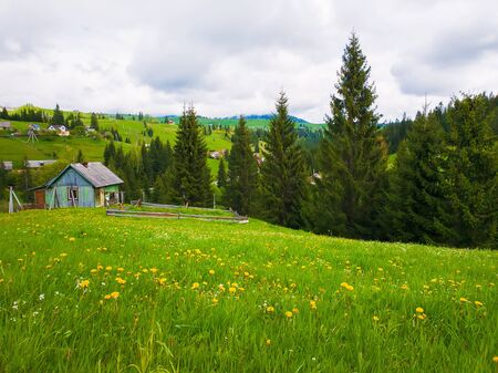 Wooden cabin near the fir forest, sunny spring day with green grass and flowering meadows in Yablunytsya, Carpathian village.