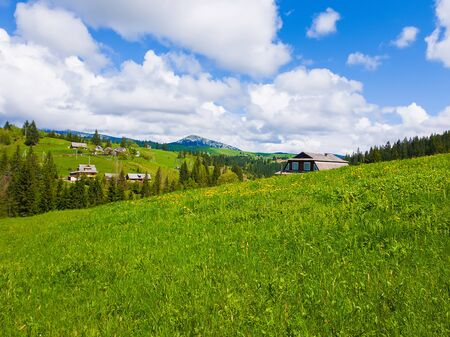 Wooden cabin near the fir forest, sunny spring day with green grass and flowering meadows in Yablunytsya, Carpathian village, Ukraine Stockfoto - 126669222
