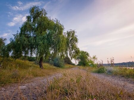 Rural landscape with a willow tree near the country road in a calm summer evening. Stockfoto