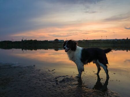 Adorable dog looking aside attentive, standing in water on the lake shore over the sunset sky reflecting on the river surface. Idyllic countryside background, curious pet and magic evening silence.