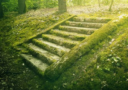 Ancient stone stair steps in the woods covered by green moss. Mysterious fairytale scene with an old stairway.