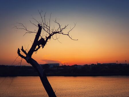 Silhouette of lonely dry tree over sunset sky background. Abstract bare willow branches, dramatic scene near lake and a city on horizon. Dead nature, environmental concept.